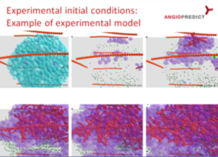 WP9 - Experimental initial conditions: Example of experimental model